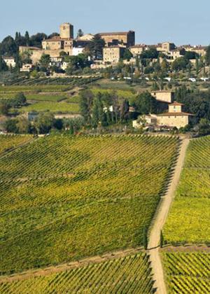 Vineyards in Greve in Chianti :: My Italian Treasures & Elizabeth Namack, tour operator